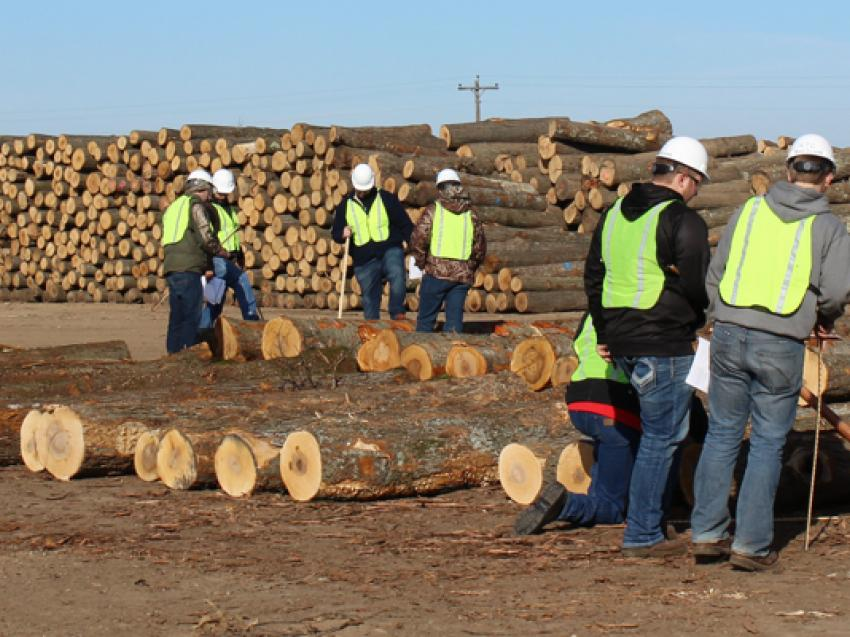 A group of workers inspecting some logs.
